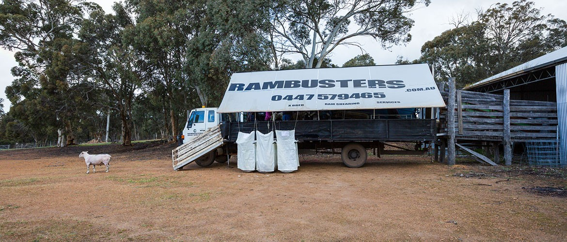 Photo of truck set up with shade shelter and wool packs with Rambusters name and 0447579465 phone number